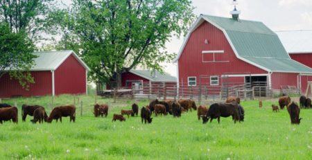 Çiftlik kiralama